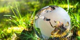 Glasklare Weltkugel in grünem Gras